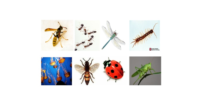 Vertebrates are animals develop and possess vertebral column which serves main functions. The