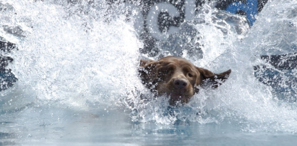 How can I stop my lab from sitting in water during summers?