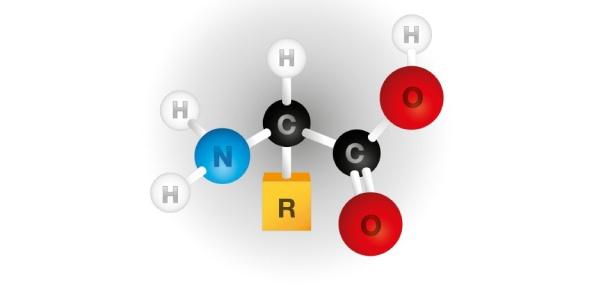 What determines the unique properties of each amino acid?