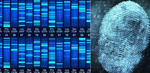 What is DNA fingerprinting and why is it important?