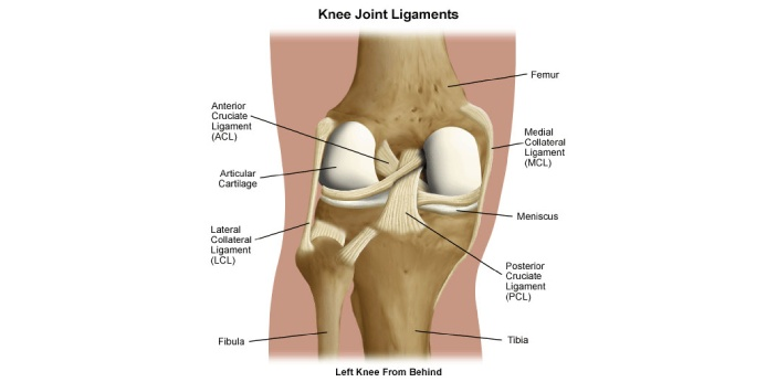 MCL stands for Medial Collateral Ligament Injury while ACL stands for Anterior Cruciate Ligament.