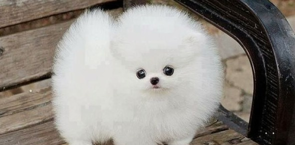 Which is the fluffiest animal?