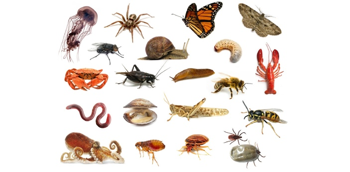 If only what you know about invertebrates is that they are animals without a backbone, then you