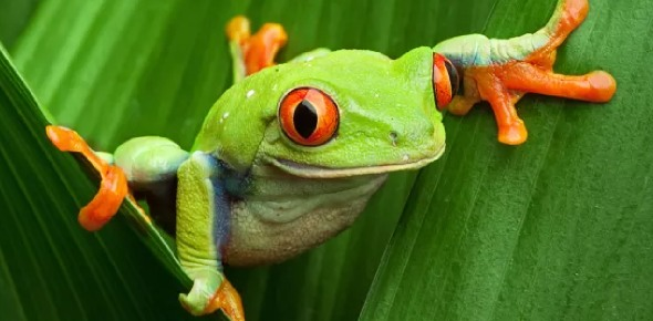 What are the three types of amphibians?