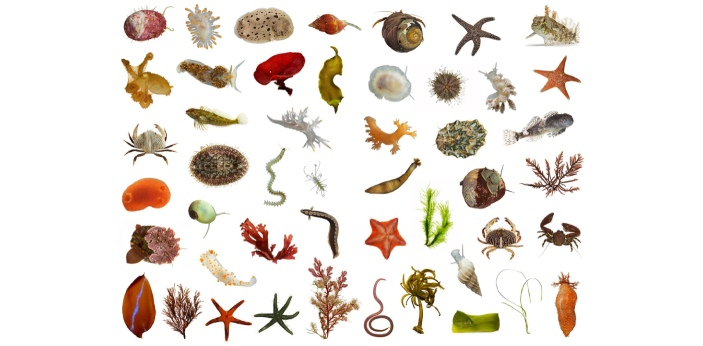 Invertebrates are animals that do not have a backbone or internal skeletons, such as spiders,