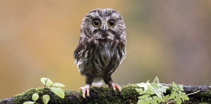 Owls are one type of animal that is considered to be nocturnal. This means that they stay awake at