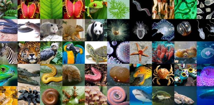 There are thousands of thousands of living organisms in our environment, varying from animals to