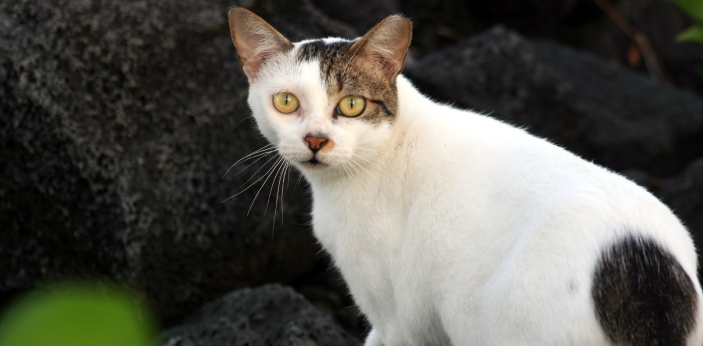 Feral cats are cats that are unaccustomed to human interaction, and either were born to stray cats