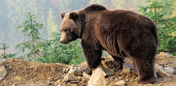 What do bears symbolize?