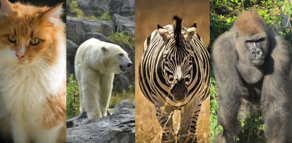 What animal sleeps in the NEST?<br/>A. Cat<br/>B. Polar bear<br/>C. Zebra<br/>D. Gorilla<br/>