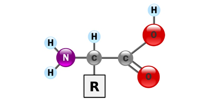 1. r group-the r group is what is unique to each amino acid. no two amino acids have identical r