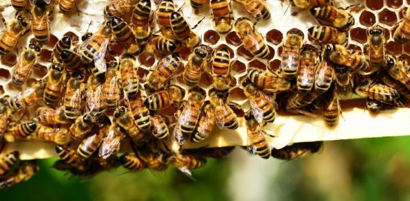 What happens if bees go extinct?