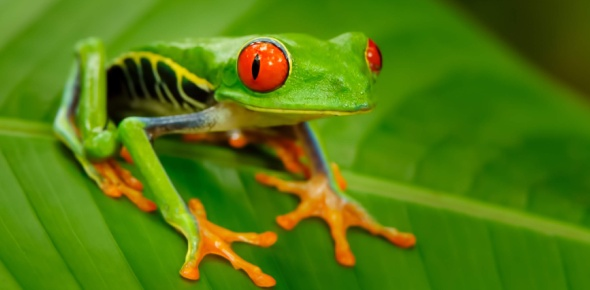 Can amphibians regrow their limbs?