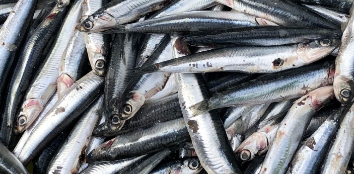 Anchovies and sardines seem to have a bad negative connotation to their names. Whenever people hear