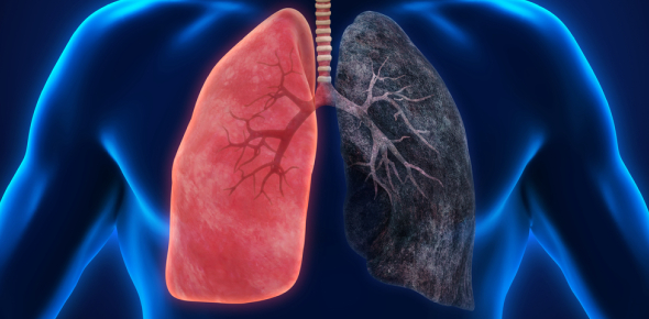 How many lobes are there in the lung?