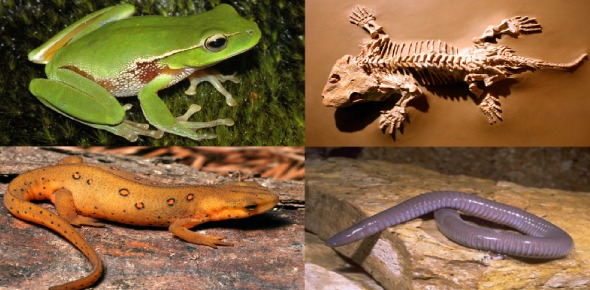 What kind of habitat do amphibians live in?