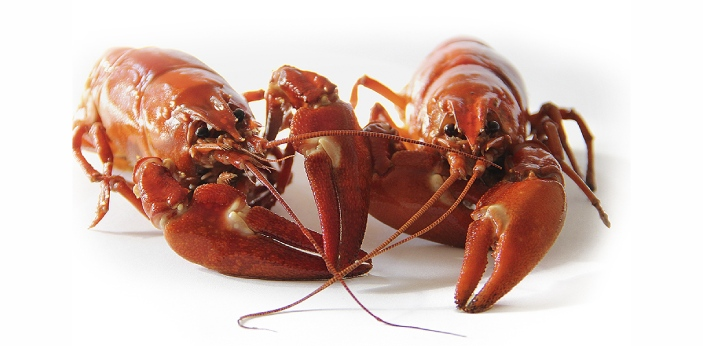 Crayfish are small freshwater shellfish with five pair of legs; they resemble a little lobster, are
