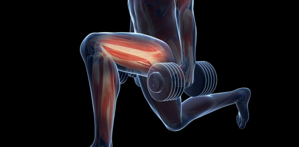 What is the difference between fast and slow twitch muscle fibres?