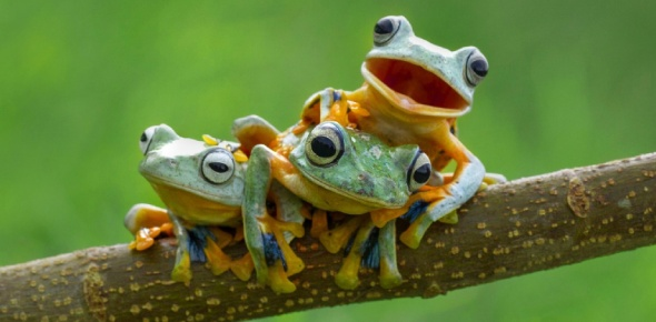Which is the most poisonous amphibian in the world?