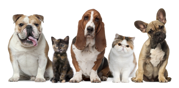 The dog is probably the most popular pet in the world because many homes that have pets have dogs.