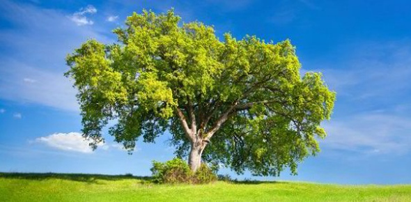 Which kind of tree you like?