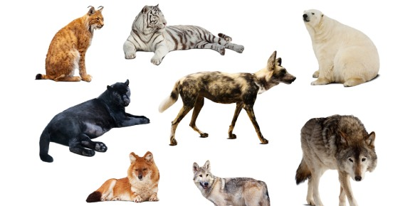 Which animal is considered man's best friend?