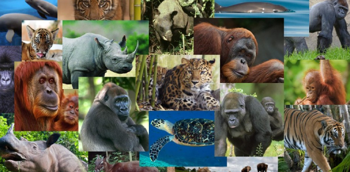 There are many endangered animals today. This means that their species is dying fast within a