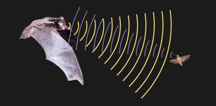 Echolocation is a process where animals produce sound waves that echo so that they can easily move