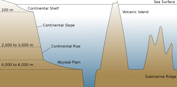 What is the abyssal plain?