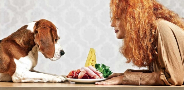 Will my dog eat my dead body if I die alone with him?