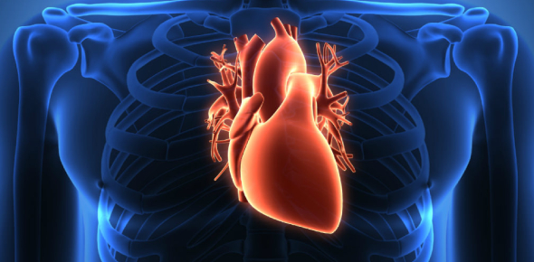 Can a human live without heart? If so, how many days?