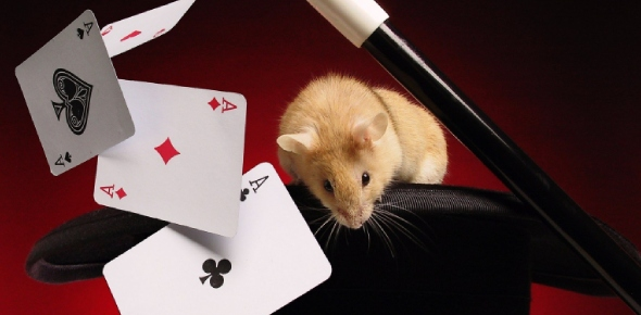 How do magicians pull out a bunny out of their hats?