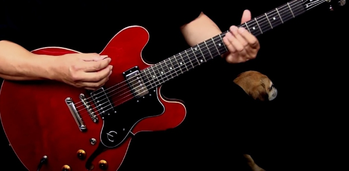 Epiphone Dot and Epiphone Sheraton are two types of guitar manufactured by a company known as