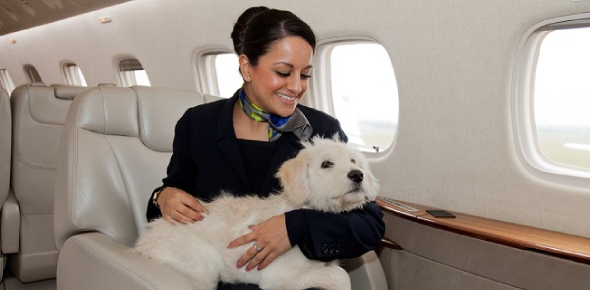 Can I travel with my dog in flights?