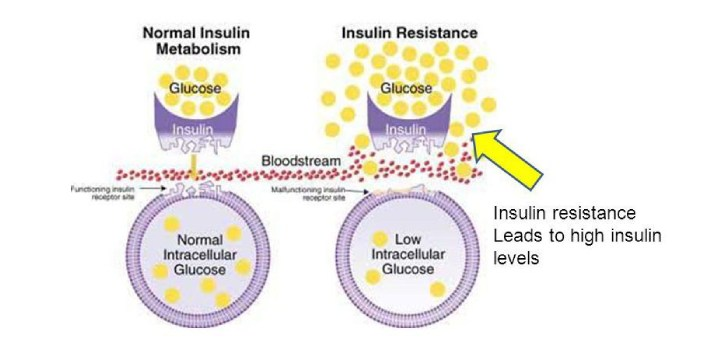 Insulin is a hormone that lets cells throughout the human body, predominantly in the liver and in