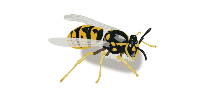 A lot of people assume at first glance that yellow jackets and honey bees are the same because of