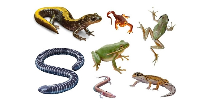 Reptiles are known to be a whole animal family. There are different animals that will be considered