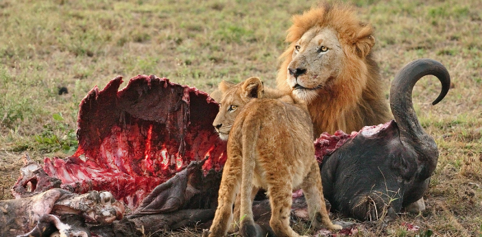 Some may assume that a carnivore is just one type, but the truth is that carnivores can be