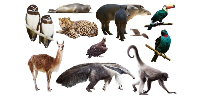 To many people, the only difference between vertebrates and invertebrates is that the former is the