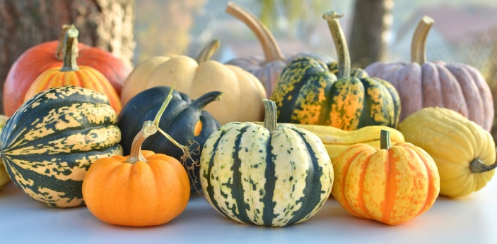 Gourds are ornamental in nature, while pumpkins are edible and are eaten when ripe. A gourd is