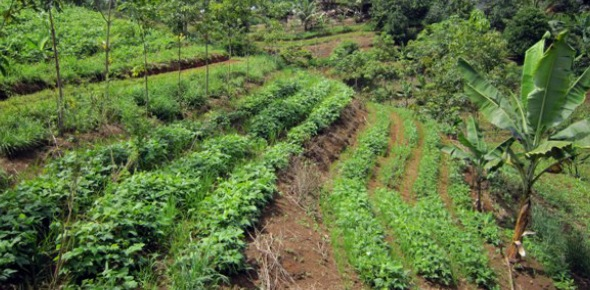 It is important to understand what agroforestry is first. This is the process by which shrubs and