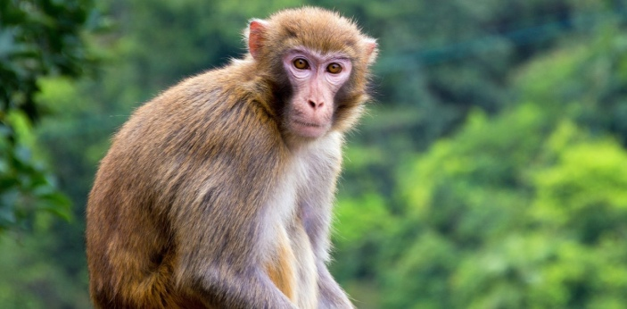 There are over 260 different species of monkey. This is probably one of the most expansive families