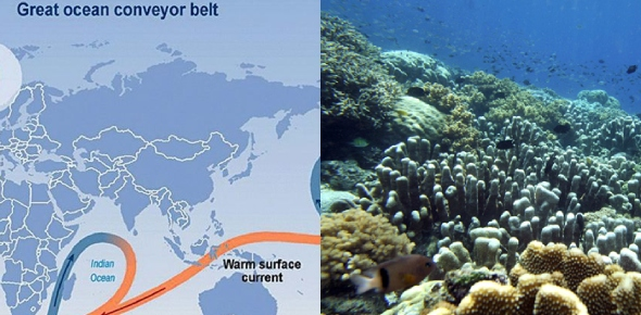 What affects do ocean currents have on the ocean floor?