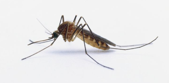 Why do mosquitoes even exist?