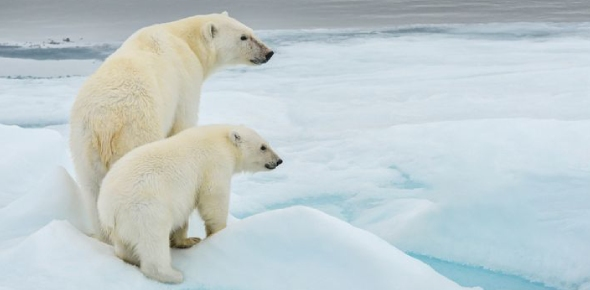 Which places does the polar bear inhabit?