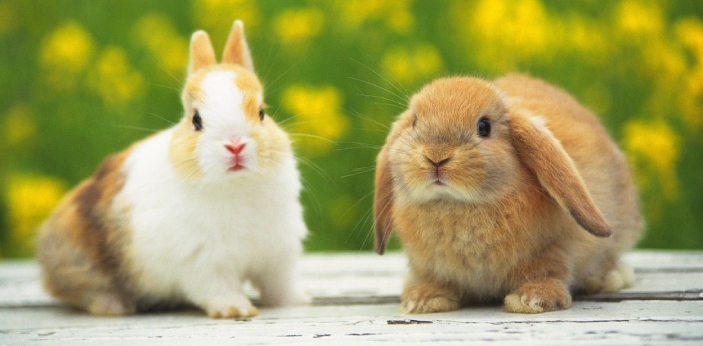 Rabbits and bunnies are two names for really the same animal. The cute little hopping animal with a
