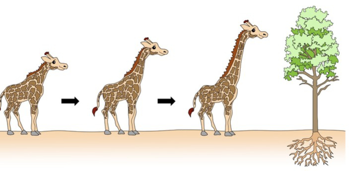The two scientists that gave theories on evolution are Darwin and Lamarck. The following explains