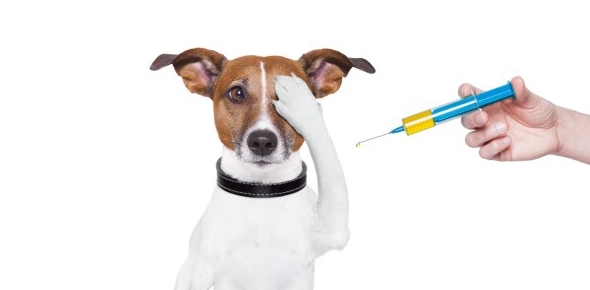 When did rabies vaccines become a common thing for dogs?