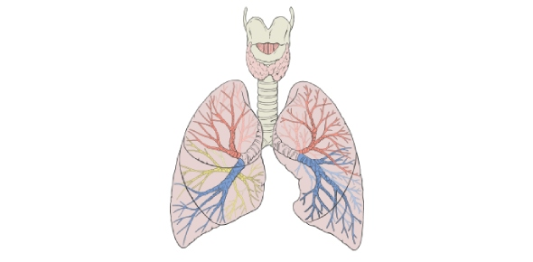 Are human lungs efficient?
