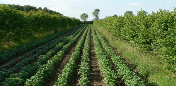 The field of agroforestry involves growing trees and shrubs near or among crops or pasture in